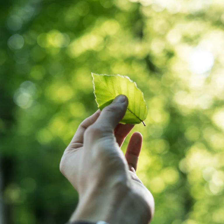 Duurzaamheidswijzer den bosch